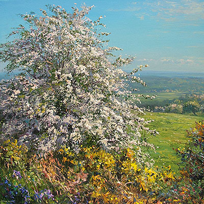 Mayblossom and Gorse, Alport Height